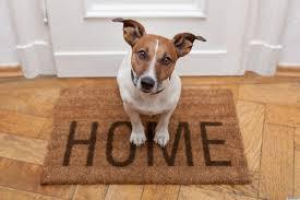 ¿Puedo ponerme alarma si tengo una mascota en casa?